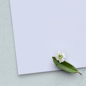 Satine paper